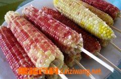 果蔬百科糯玉米